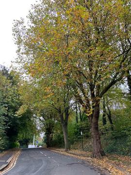 Trees on Oxford Street